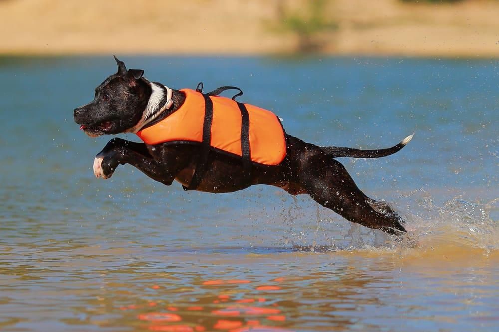 Beste-zwemvest-hond